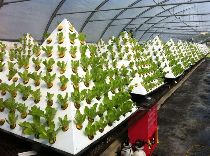 Выращивание растений под по 113