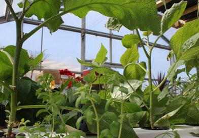 Bring Your Garden Inside
