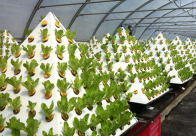 The Importance of Hydroponic Nutrients